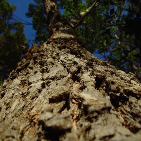 Bäume – gar nicht so lautlos