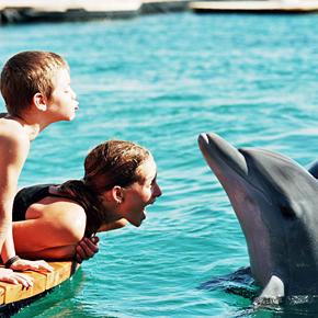 Delfine mit Kindern
