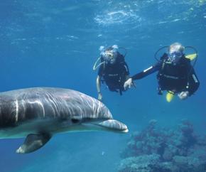 Delfin mit Tauchern
