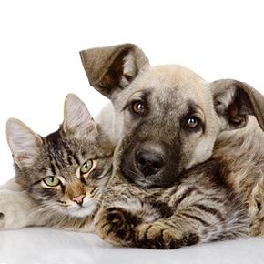 Haben dank Logocos keine Tierversuche zu fürchten: Katze und Hund