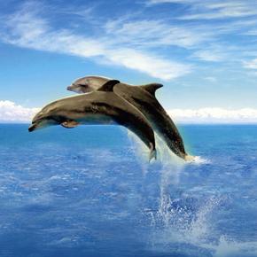 Begegnungen mit den »Menschen der Meere«