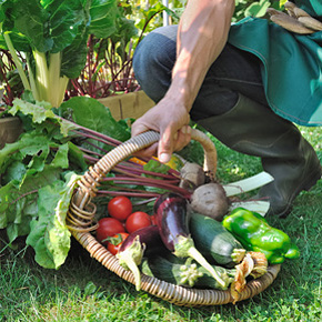 Ein eigener Gemüsegarten