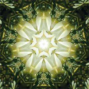 imagami-Energien für den Alltag