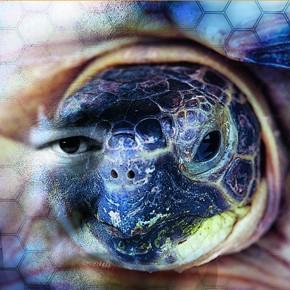 Die Weisheit der Schildkröte