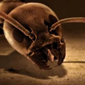 Krieg der Ameisen